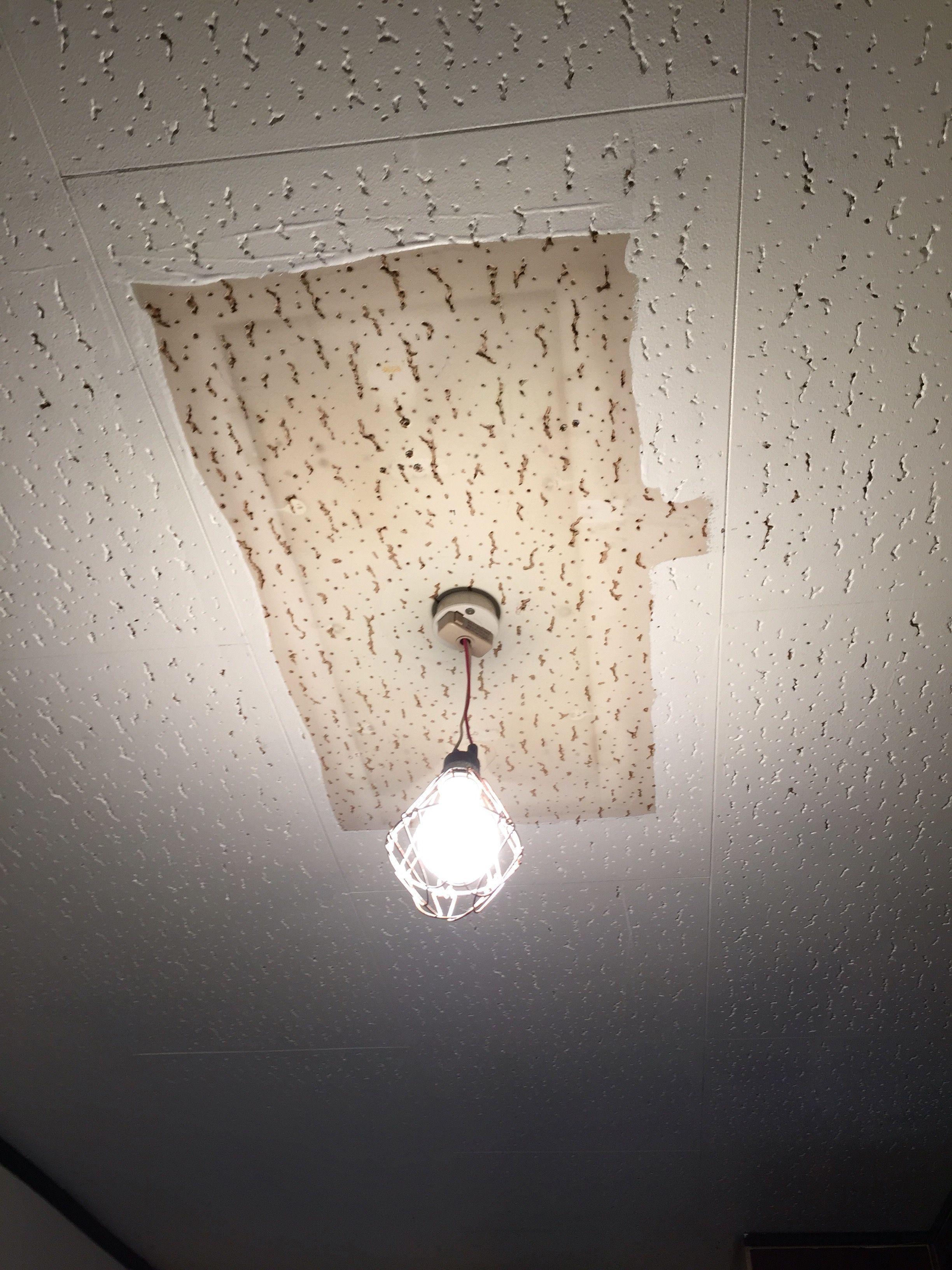 Diy ジプトーン天井を白ペンキで塗装してみた 方法と留意点まとめ