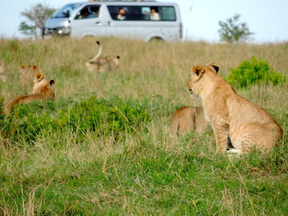Kenya Africa Click to see write up on our week on safari Masai Mara
