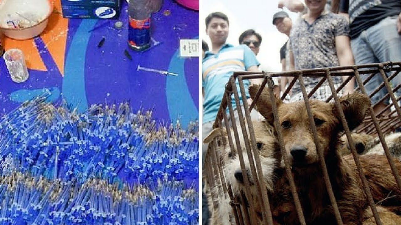 Chinese Gang Sold Poisoned Darts To Kill Dogs For Restaurant Food