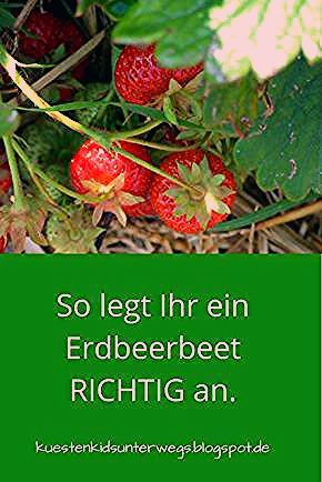 Photo of Unterwegs im Garten: Erdbeerbeet anlegen
