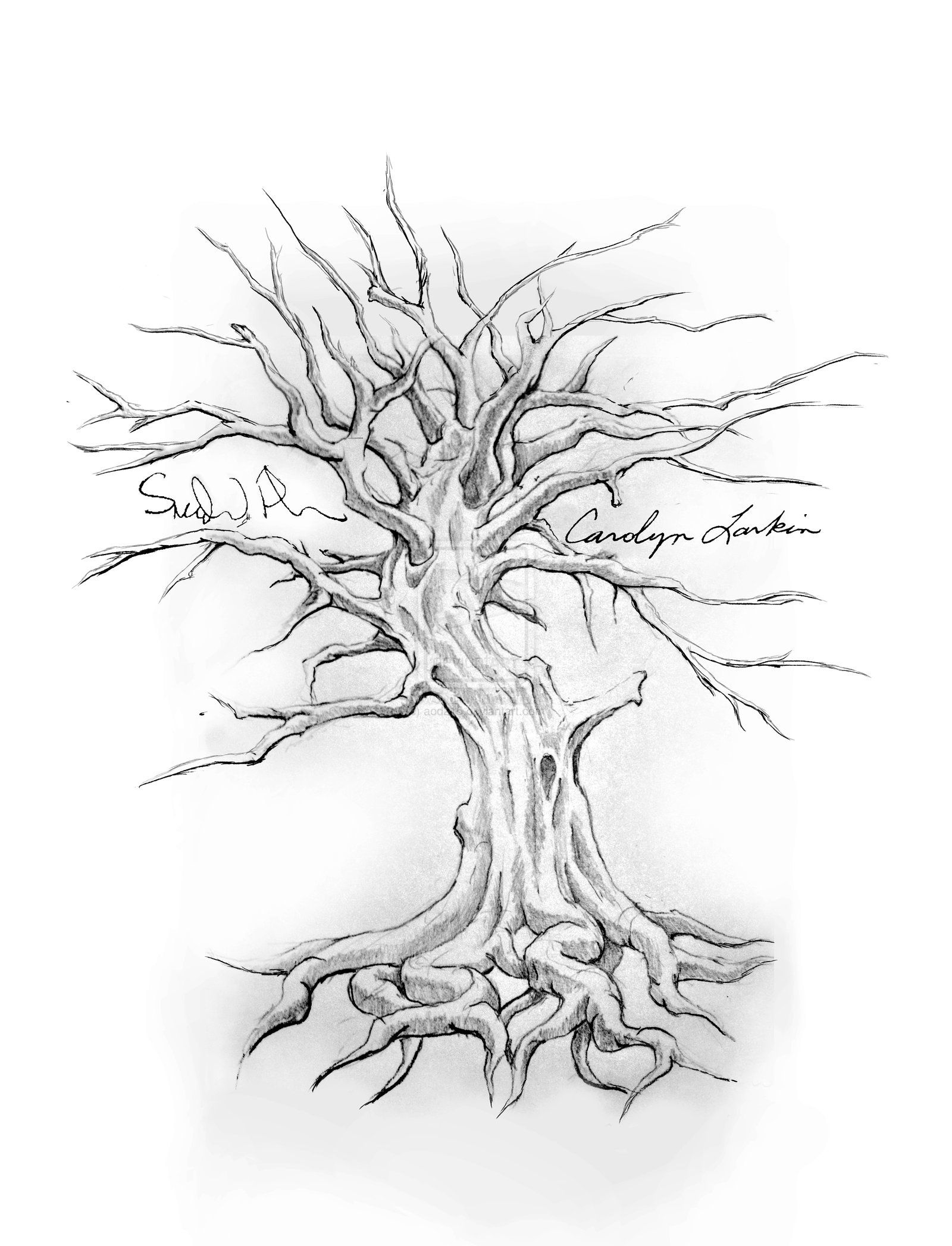 Family Tree Tattoo Drawing Designs - Start gathering all your ...