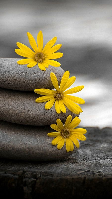 Close Up Stones Flowers Green Yellow 4435 640x1136 Flower Wallpaper Yellow Flower Wallpaper Flower Iphone Wallpaper Fantastic yellow flower hd wallpaper