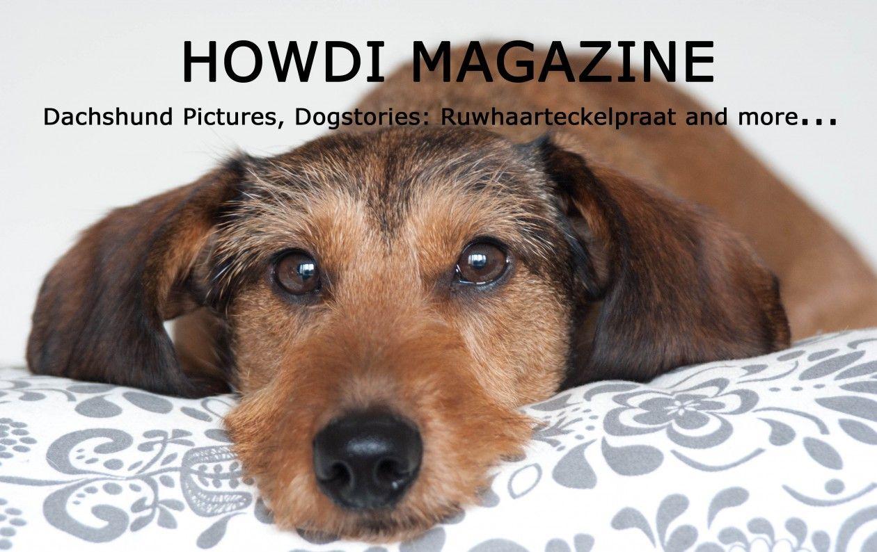 Howdi Magazine Dachshund Pictures Dachshund Dogs