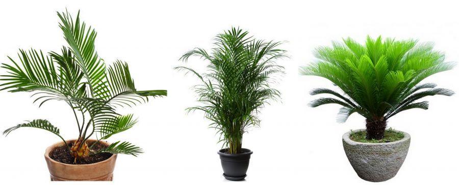Prozdrowotne Rosliny Doniczkowe Ktore Warto Miec W Domu Plants