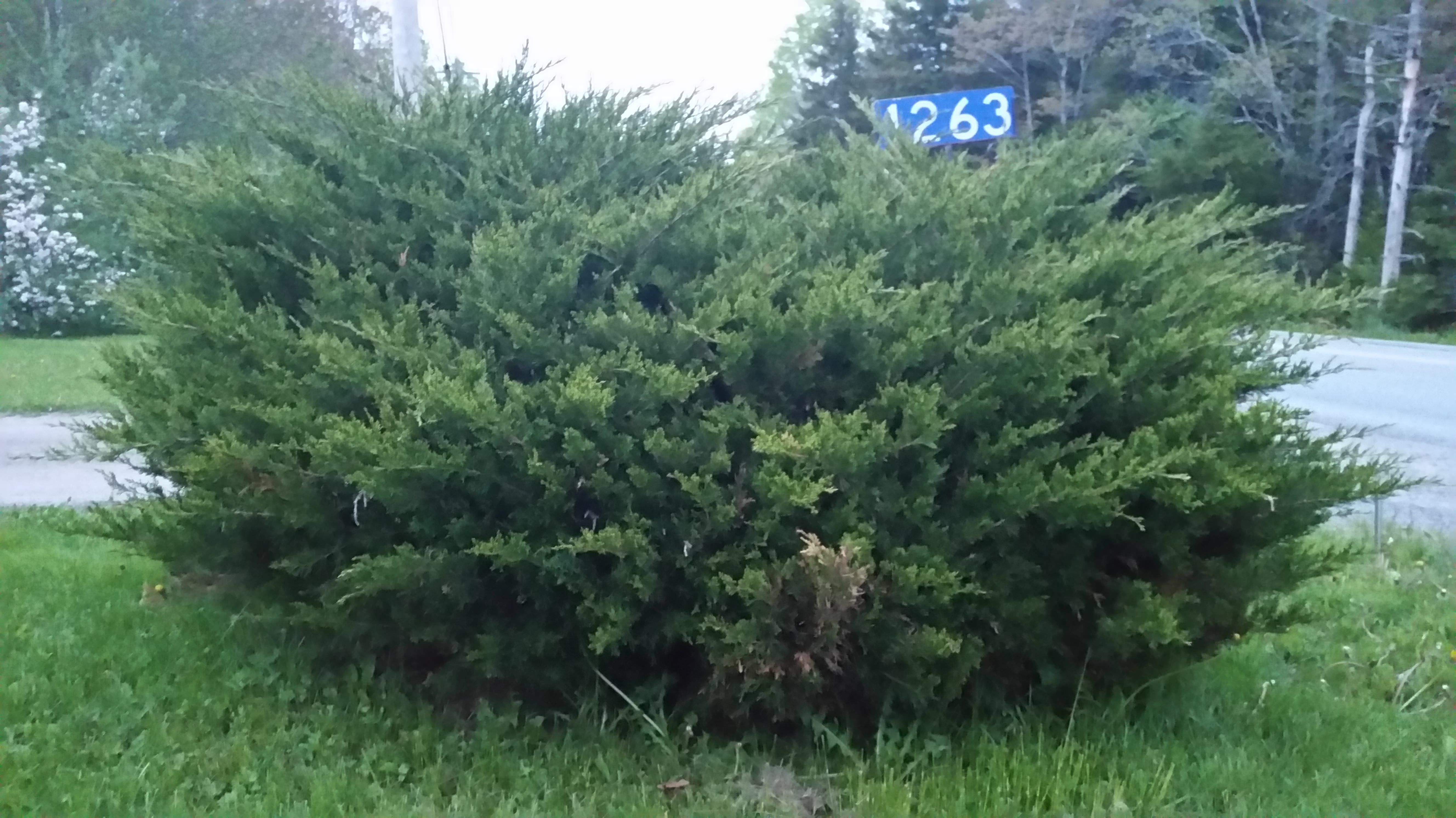 40 Fast Growing Shrubs and Bushes For Creating Privacy in