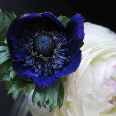 Best 25 Indigo Wedding Ideas On Pinterest Romantic