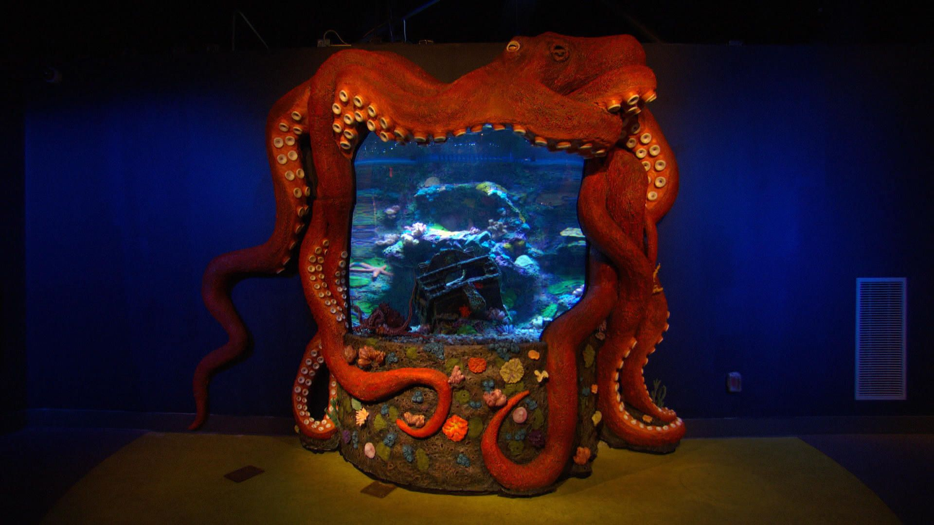 Check out this amazing octopus tank, made just for the Greensboro Science Center!