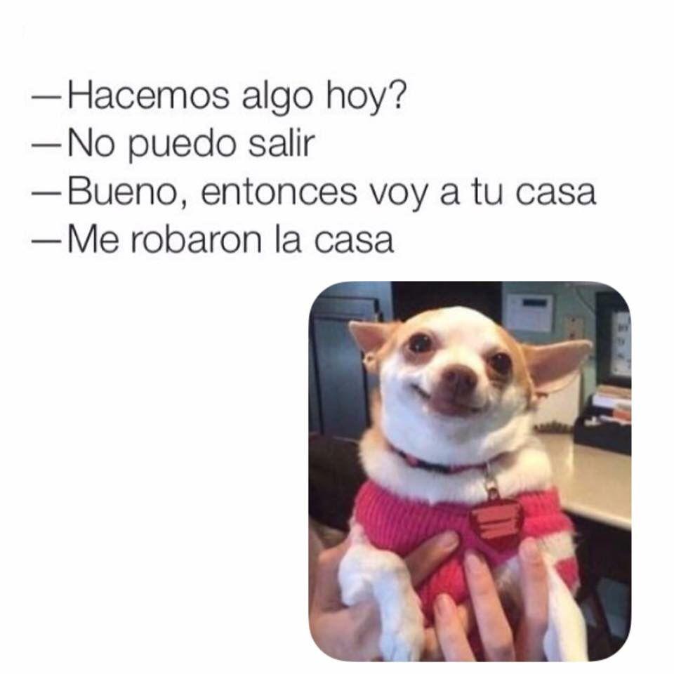 Cuando no quieres ver a alguien pero insiste #memes #perrito #chihuahua #amor #ligue