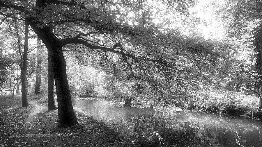 #photography pluie de lumière by denisln9 https://t.co/6PxQk76mzN #followme #photography