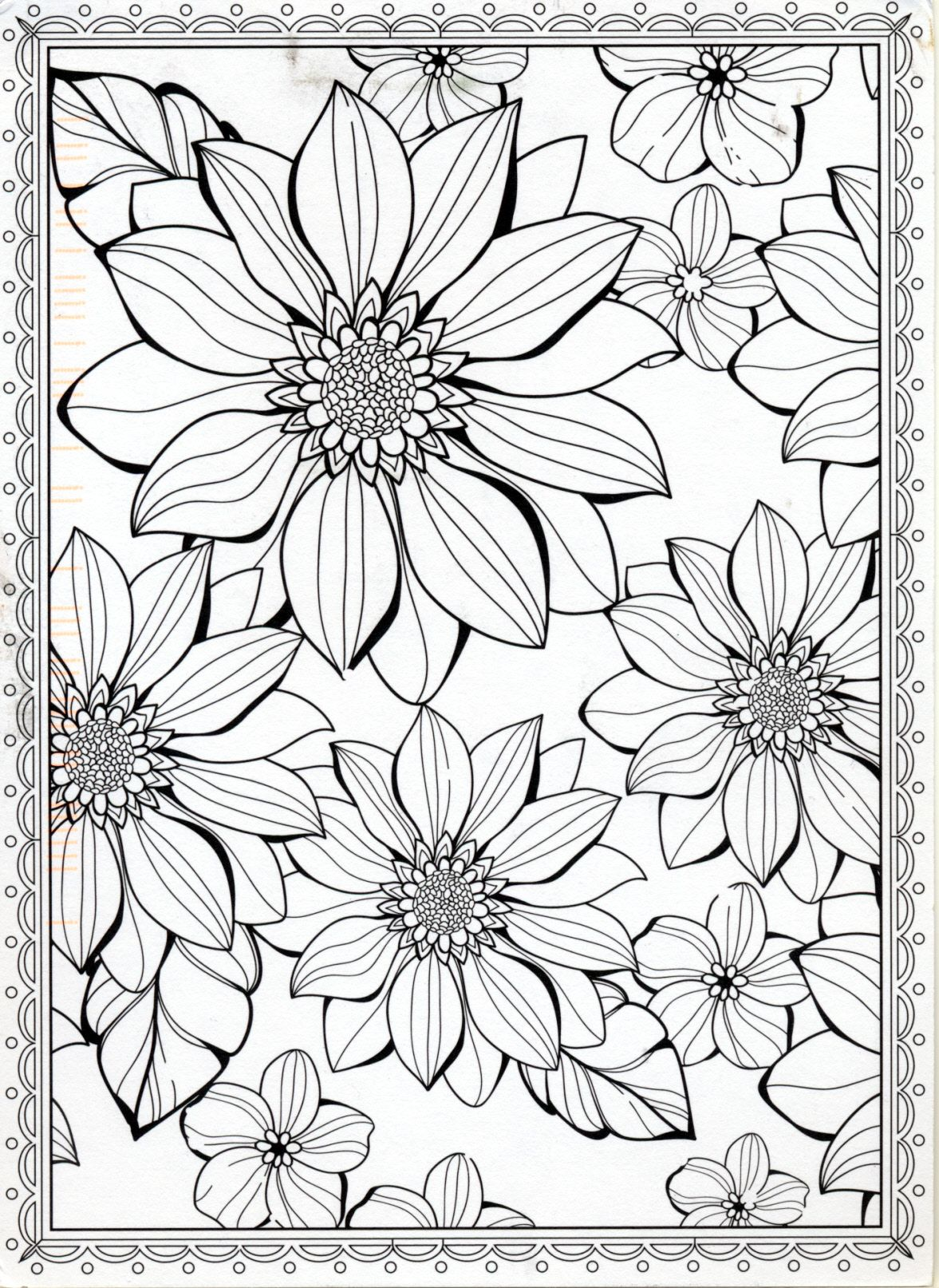 Flowers To Color Postcard From Liane In Rosenheim Germany With