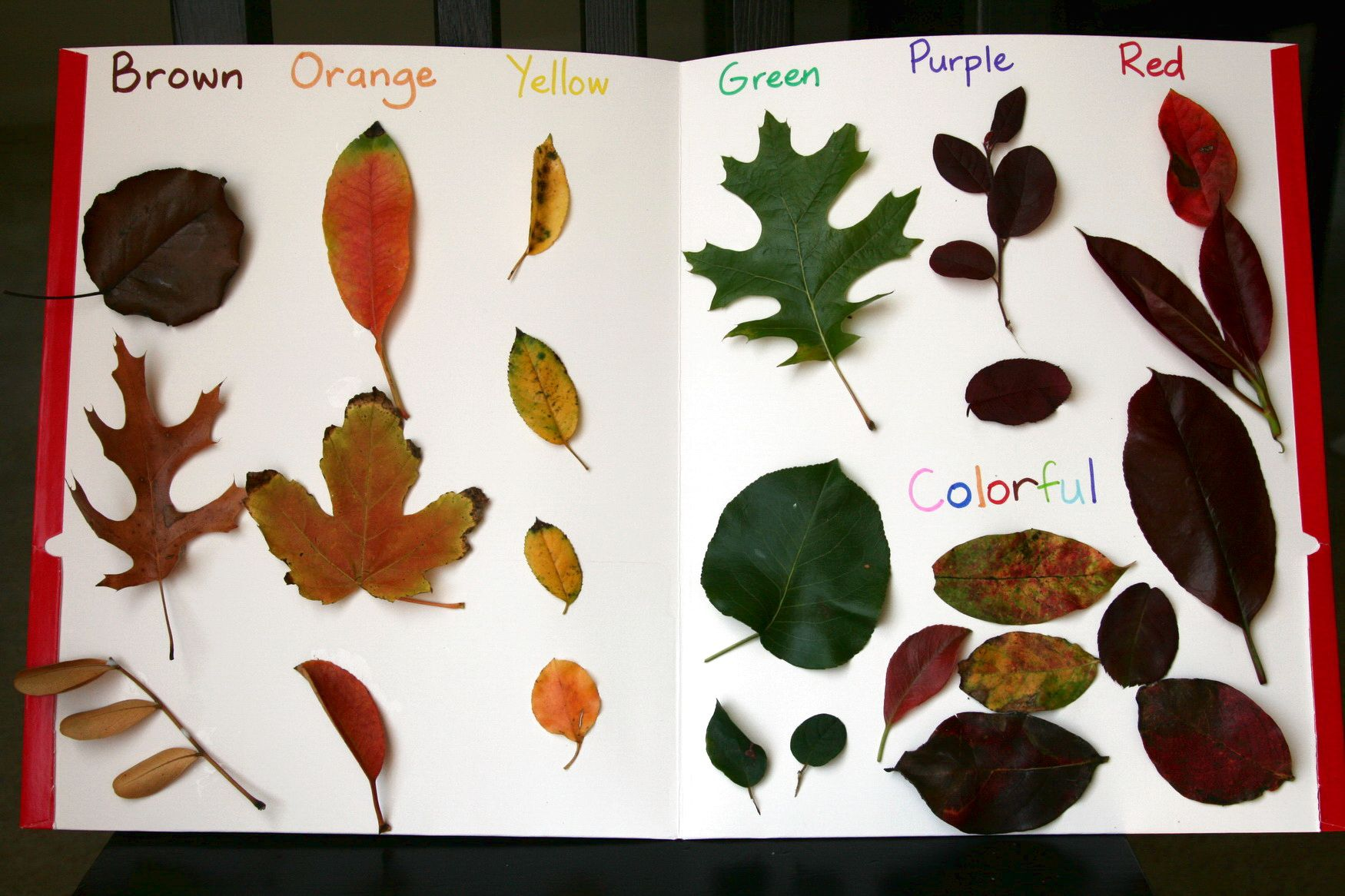 Leaf Art For Preschoolers