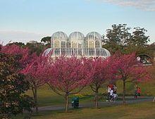 Cherry Blossom Wikipedia The Free Encyclopedia Cherry Blossom Blossom Cherry Blossom Tree