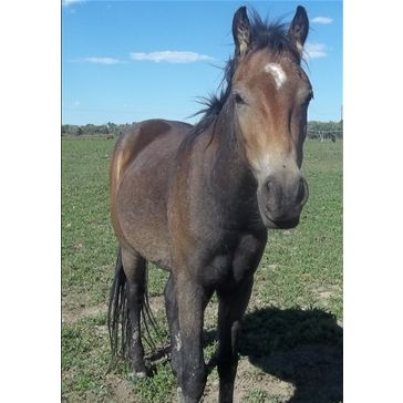Dream Catchers Equine Rescue Hanky Panky is one of my favorite little guys at DreamCatchers 16