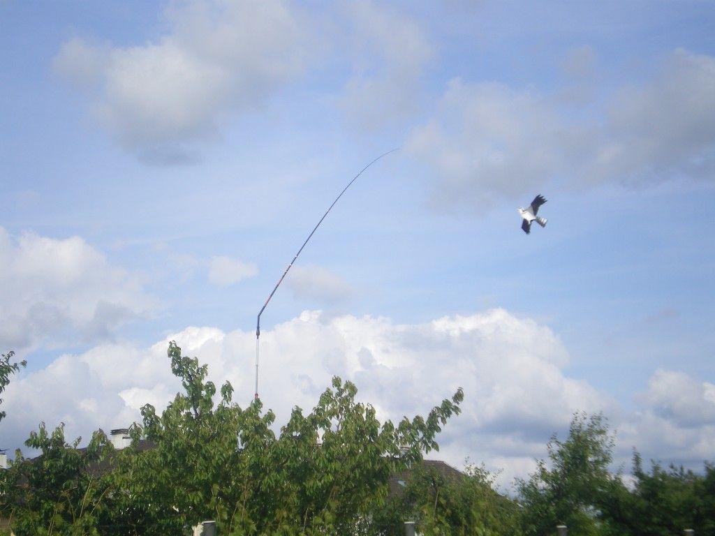 Instalation cerf volant effaroucheur dans mon cerisier avec mat de rotation 360 comment - Faire pousser un cerisier ...