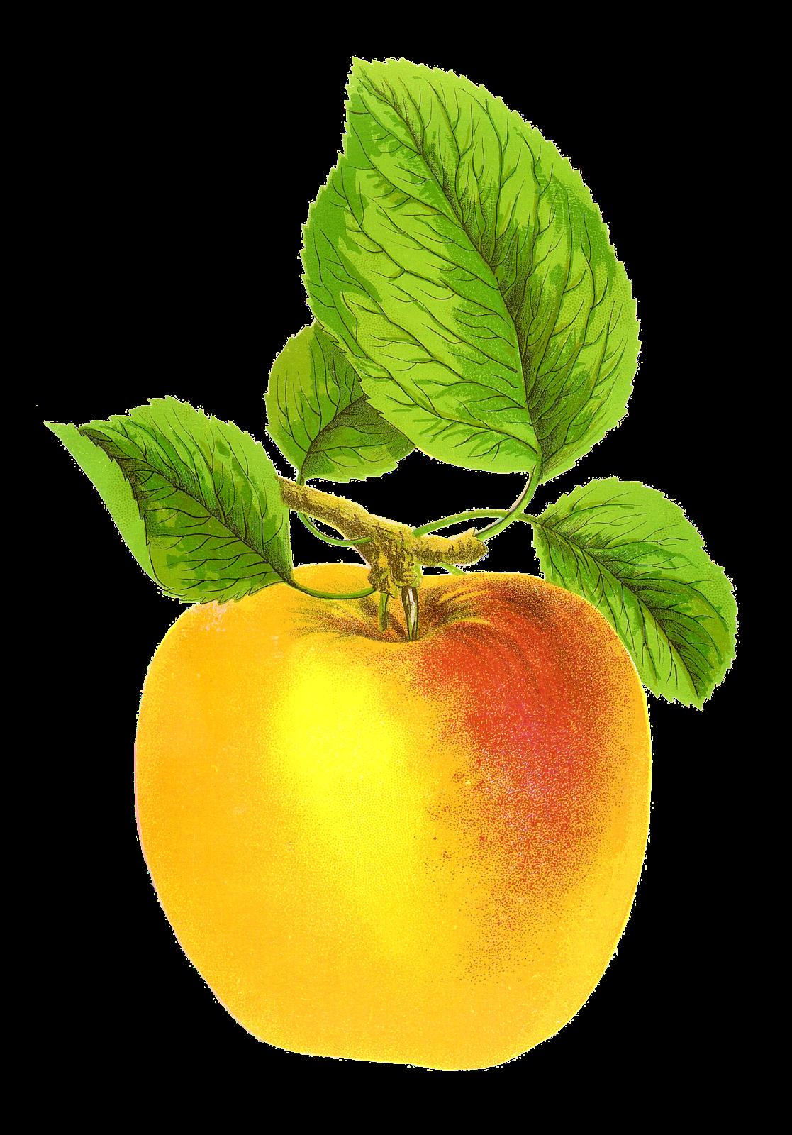antique free digital fruit