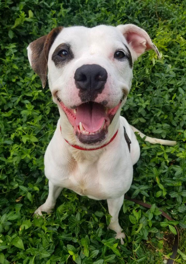Adopt Indi, 8133 on Petfinder Dog adoption, Help