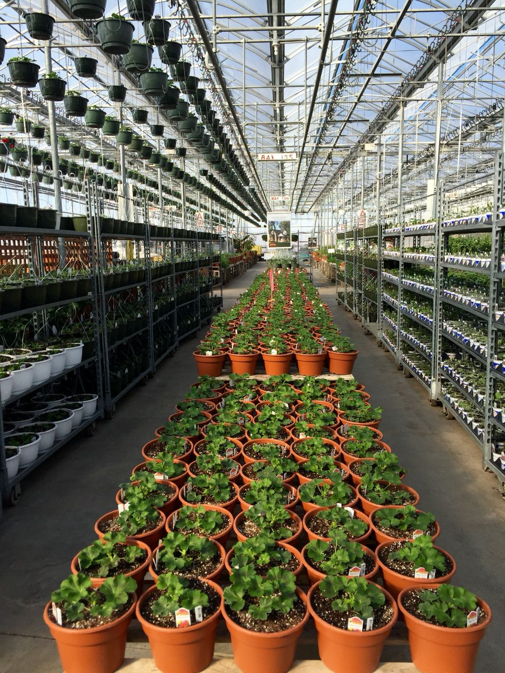 The greenhouses are filling up from top to bottom. Lots and lots of plants in pots!