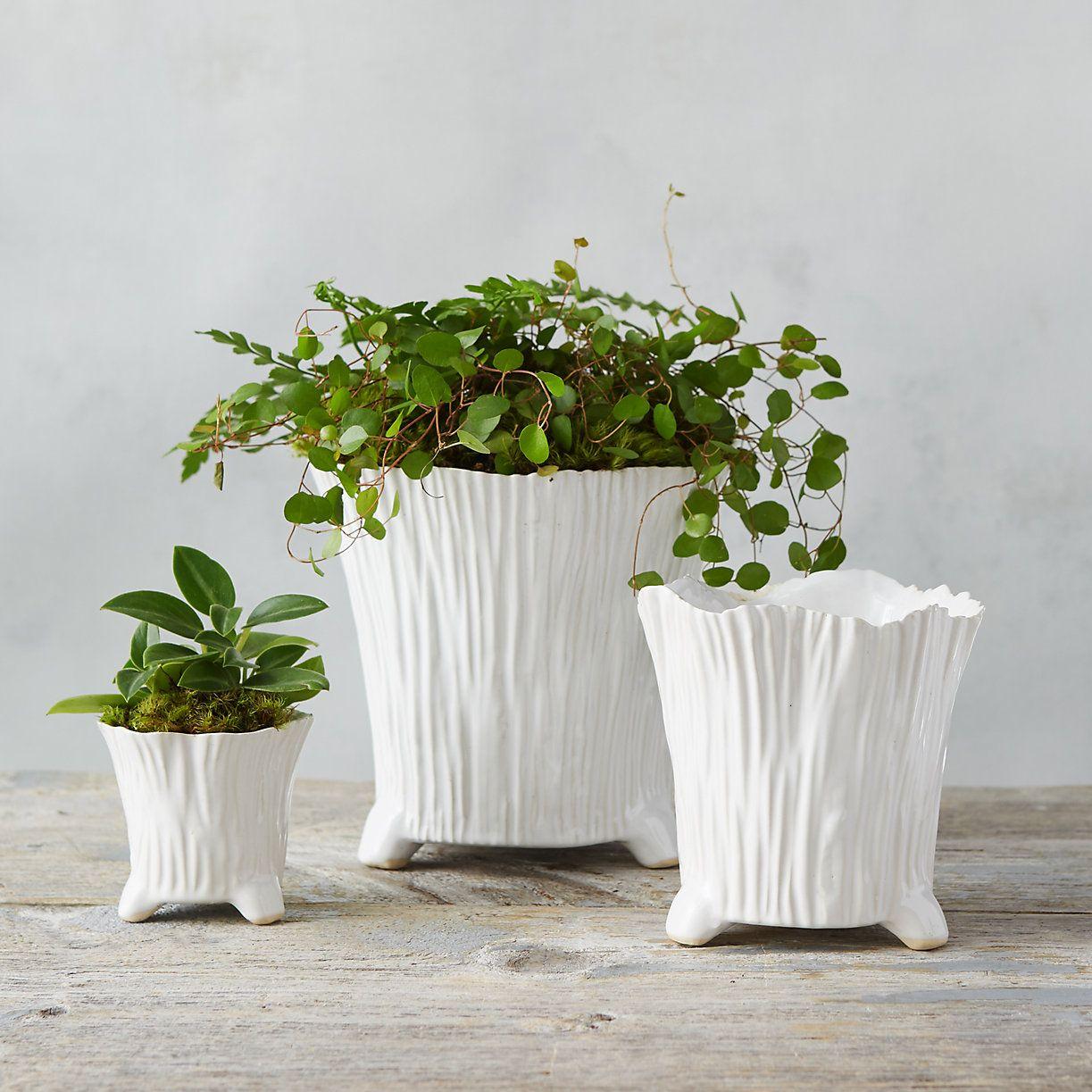 Ceramic Rose Pot Terrain With Images Flower Pots Outdoor
