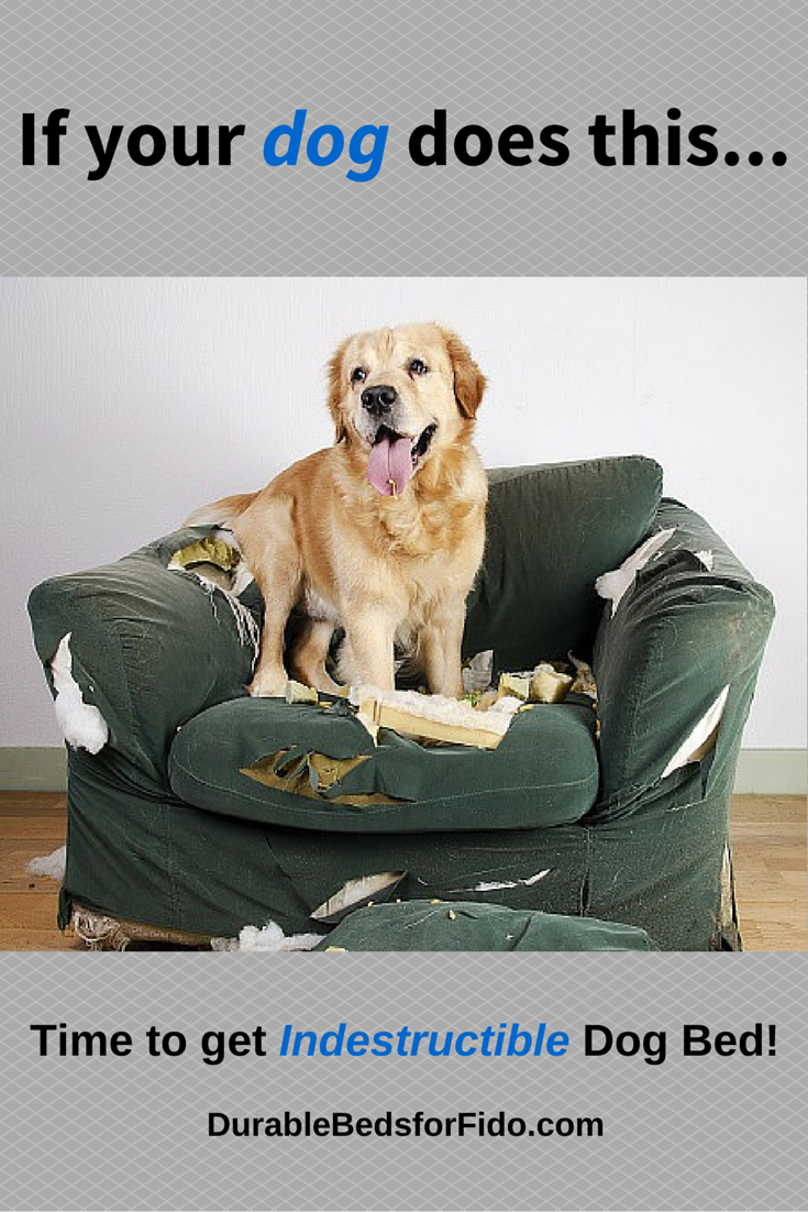 Dogs that like to chew and destroy their dog beds need an