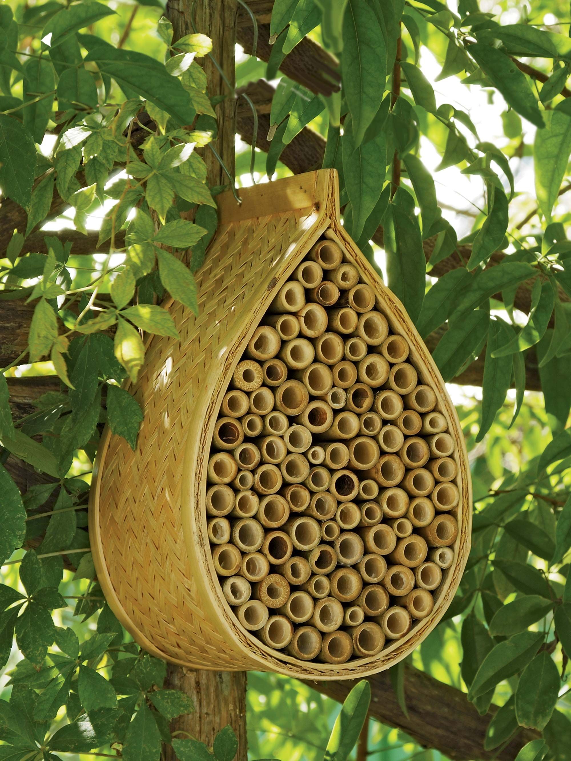 About Mason Bees, Beneficial Bees: Gardener\'s Supply | Mason bees ...