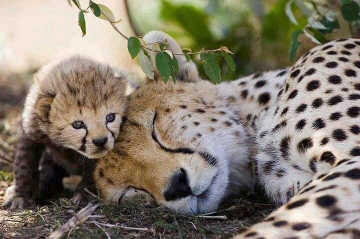Baby watching over as her mother sleeps!