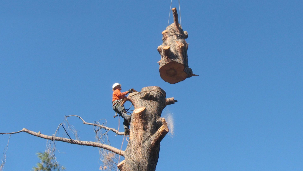 Tree Removal Tree service, Tree removal, Tree lopping