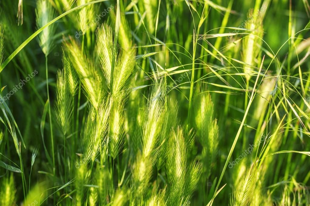 Abstract natural background with green summer grass