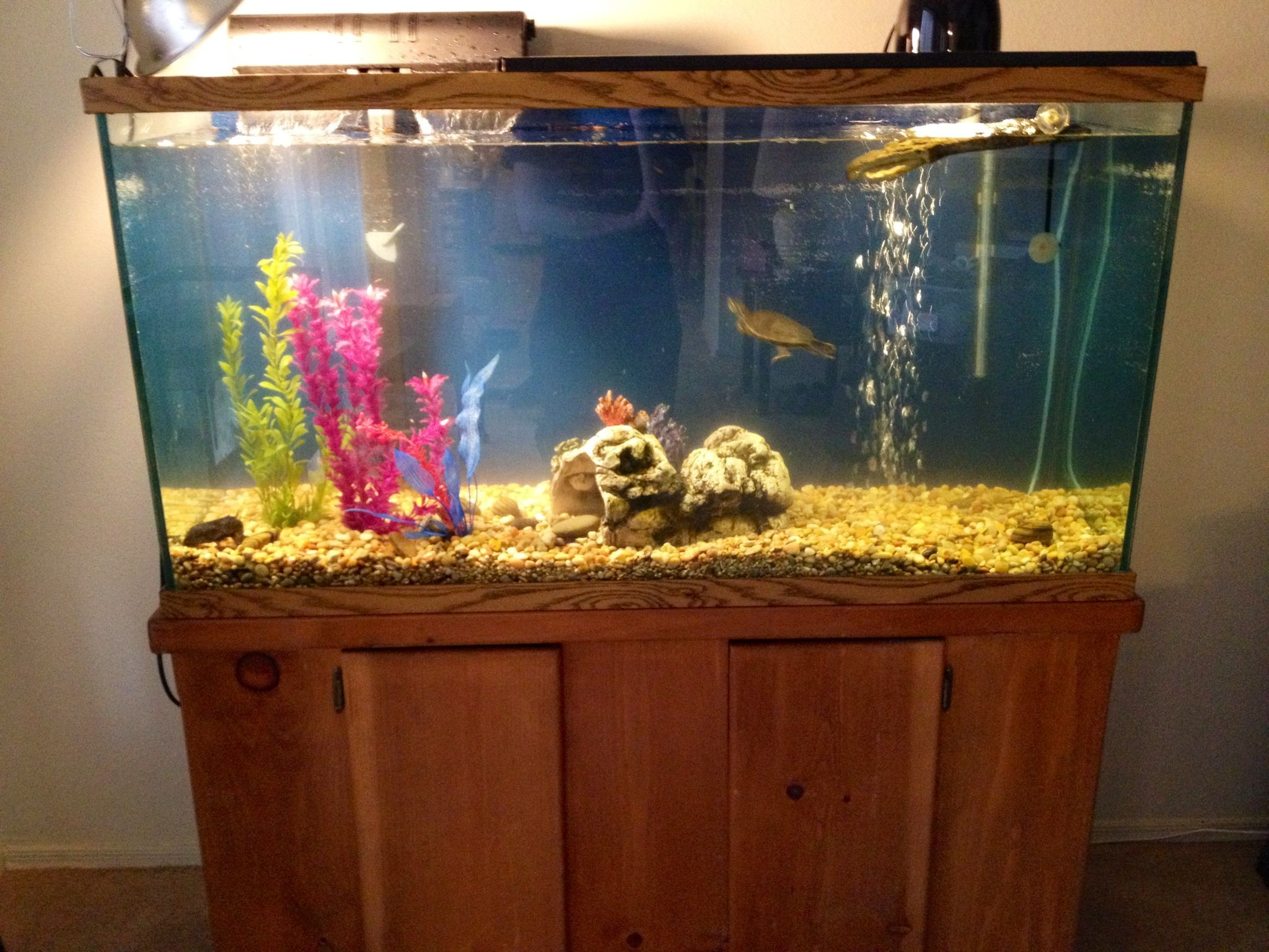 Turtle Tank Decor 75 Gallon Tank For My Western Painted Turtle Got This Off