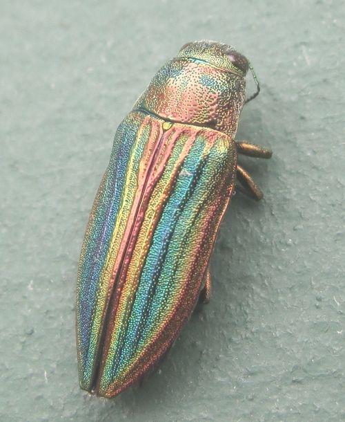 Photo (Exercice de Style) | Insectos, Escarabajo y Naturaleza