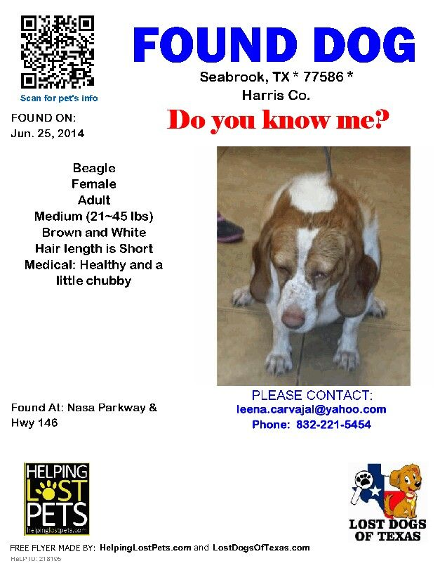 Found Beagle Seabrook Tx Found Dogs In Texas Dogs Beagle