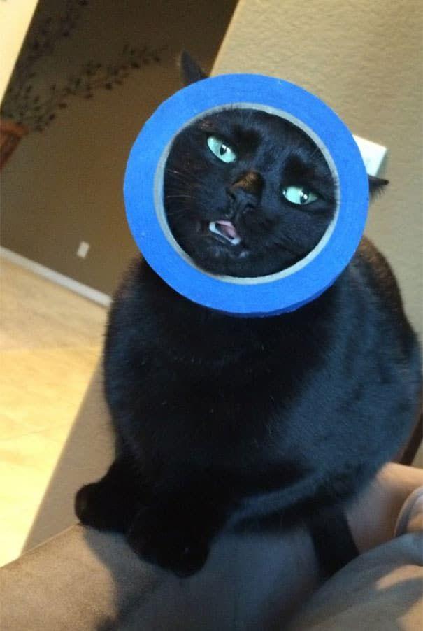 сКОТч -- Смешные коты 1   Смешные животные, Смешные ...