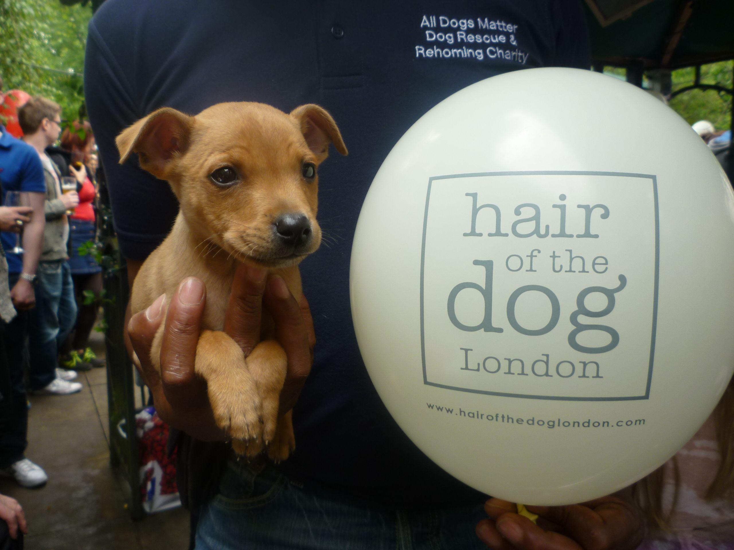 Pup Idol 2012 sponsored by Dog