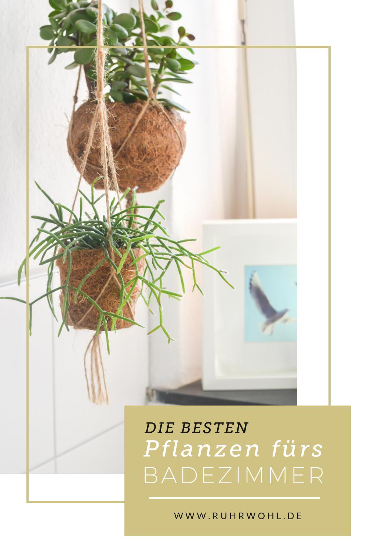 Pflanzen Im Badezimmer Sorgen Fur Ein Angenhemes Klima Doch Welche Eignen Sich Dafur Mit Bildern Pflanzen Im Badezimmer Pflanzen Pflanzenschaukel