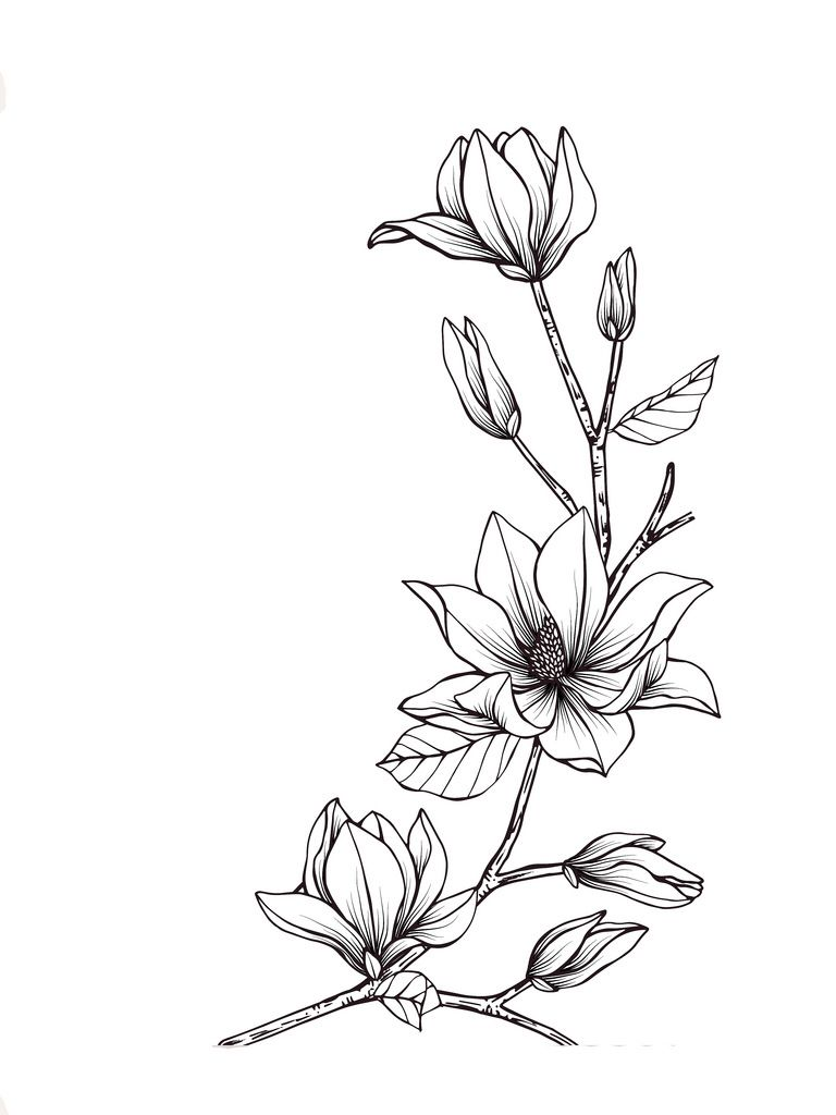 Magnolia Flower Line Drawings Flower Drawing Floral Drawing
