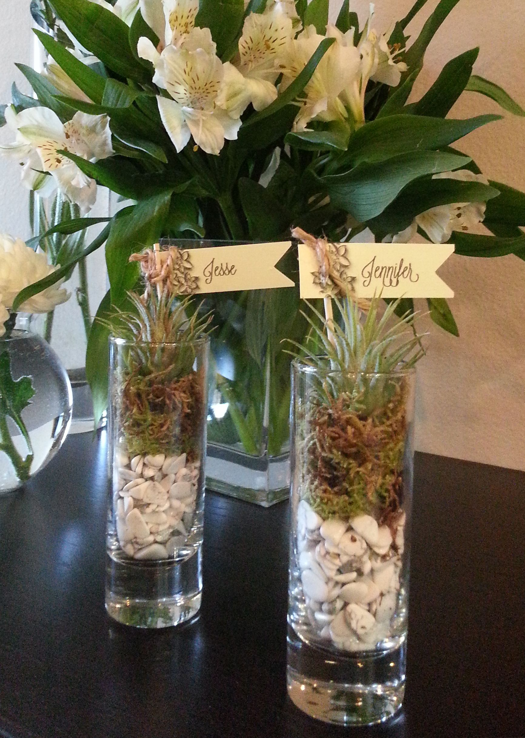 Favor place card mini air plants in shot glasses diy favor place card mini air plants in shot glasses diy reviewsmspy