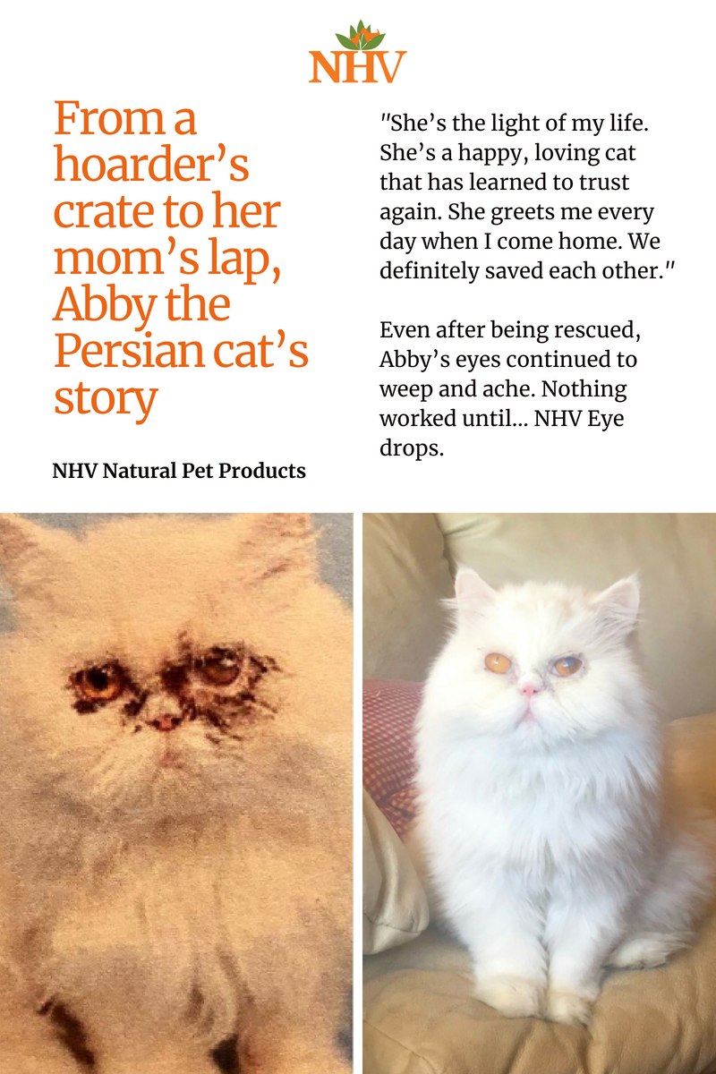 From A Hoarder S Crate To Her Mom S Lap Abby The Persian Cat S Story Persian Cat Cats Tears In Eyes