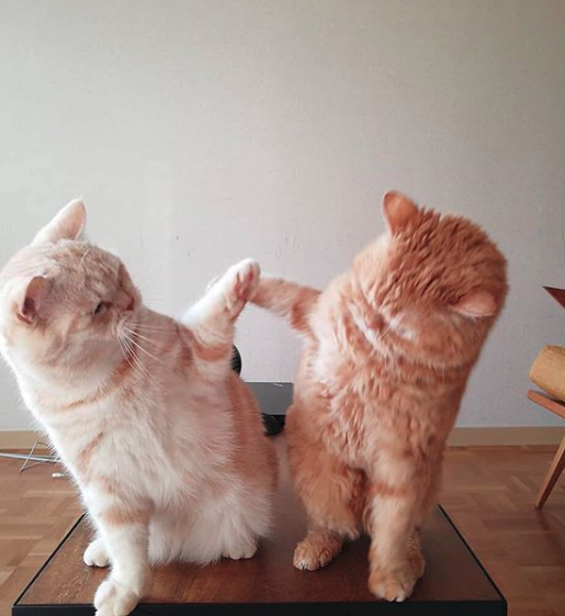 High Five Brotherhttps I Redd It Mtj9yol4tr521 Png Cute Cats Cute Animals Pretty Cats