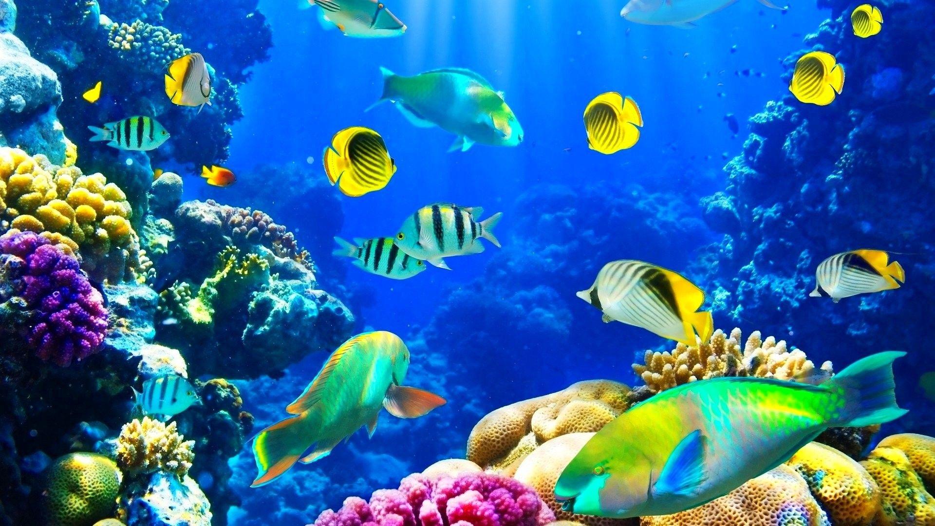 Ocean Fishes Nature Sea Sealife Underwater
