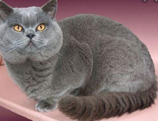 Cara Merawat Kucing Terlengkap 2020 Industri Kelinci Di 2020 Kucing Piaraan Kucing Cantik