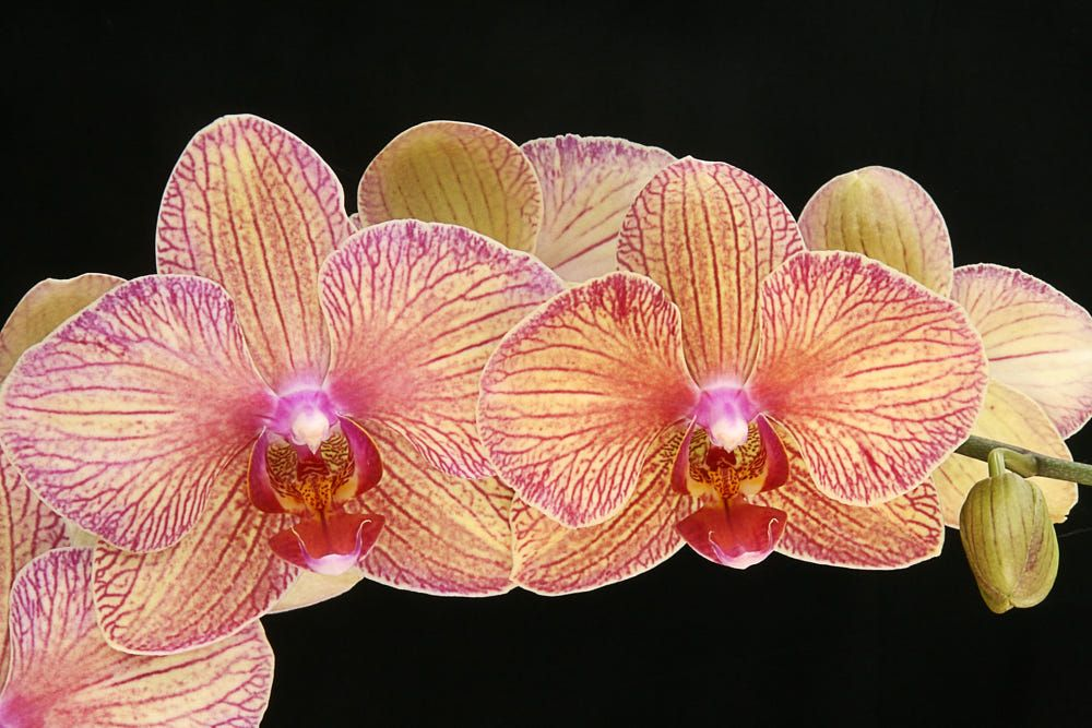 ORCHID by CW ANDERSON on 500px