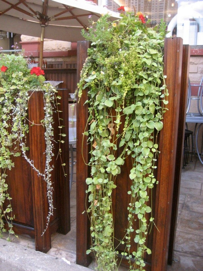 Hanging plants google garden pinterest for Outdoor vertical wall garden