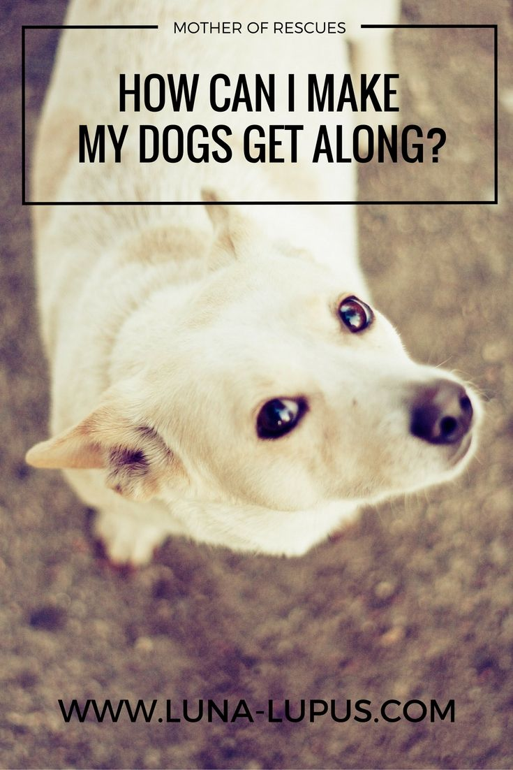 How Can I Make My Dogs Get Along Dog Training Dogs Pets