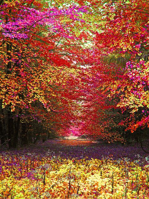 Autumnal celebration | Autumn ~ Splendor | Autumn trees ...