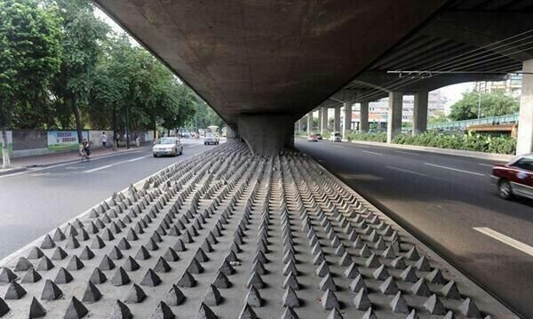 Anti-homeless spikes. Humans are the most inhumane of all.