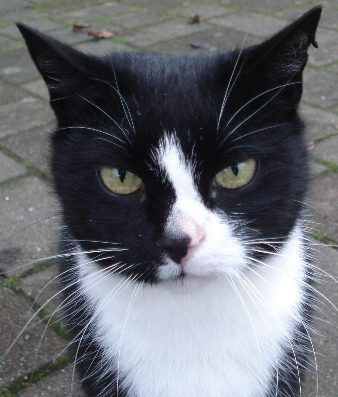Black and White Cat Cute cat names, Black and white