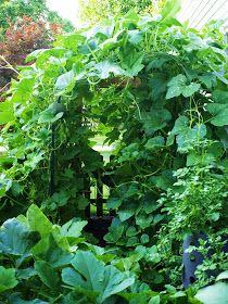 ~Ohio Thoughts~: Building a Pumpkin Arbor