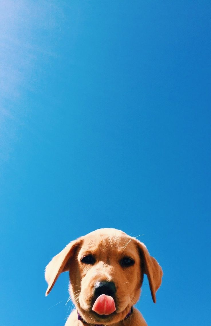 Vsco 10 00 Republishes Macarnn Cute Animals Cute Baby Animals Dog Photography