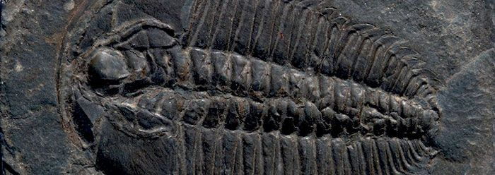 Cambrian Clash: Fossils and Molecular Clocks Disagree | The Institute for Creation Research