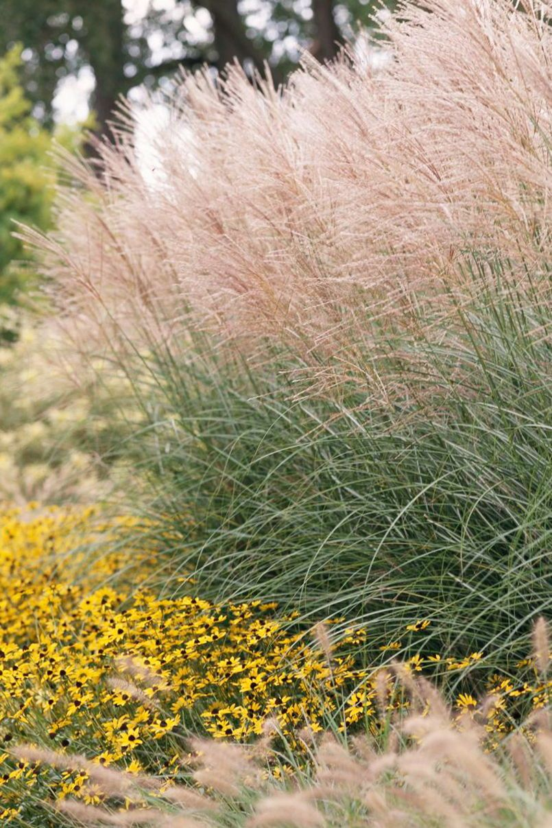23 Varieties Of Ornamental Grasses We Re Obsessed With Grasses