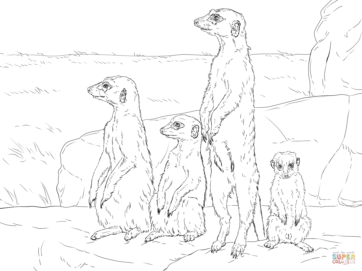 meerkats standing up coloring color animals